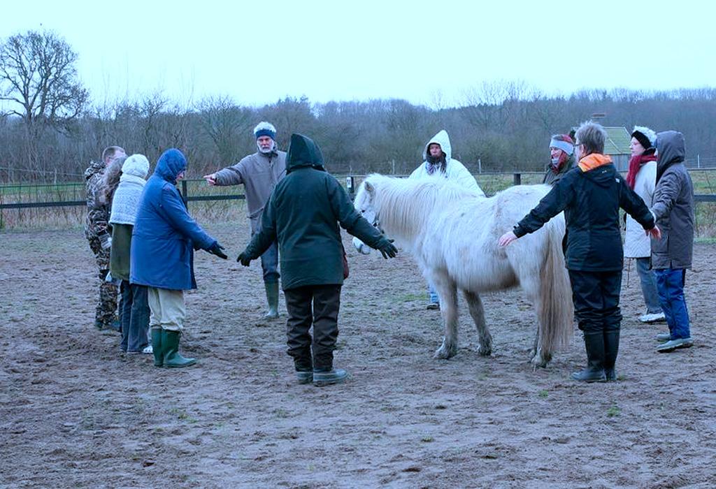 Igangsættelse af Coaching med heste