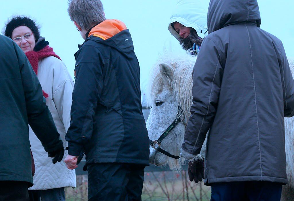 Her ses et eksempel på coaching med heste