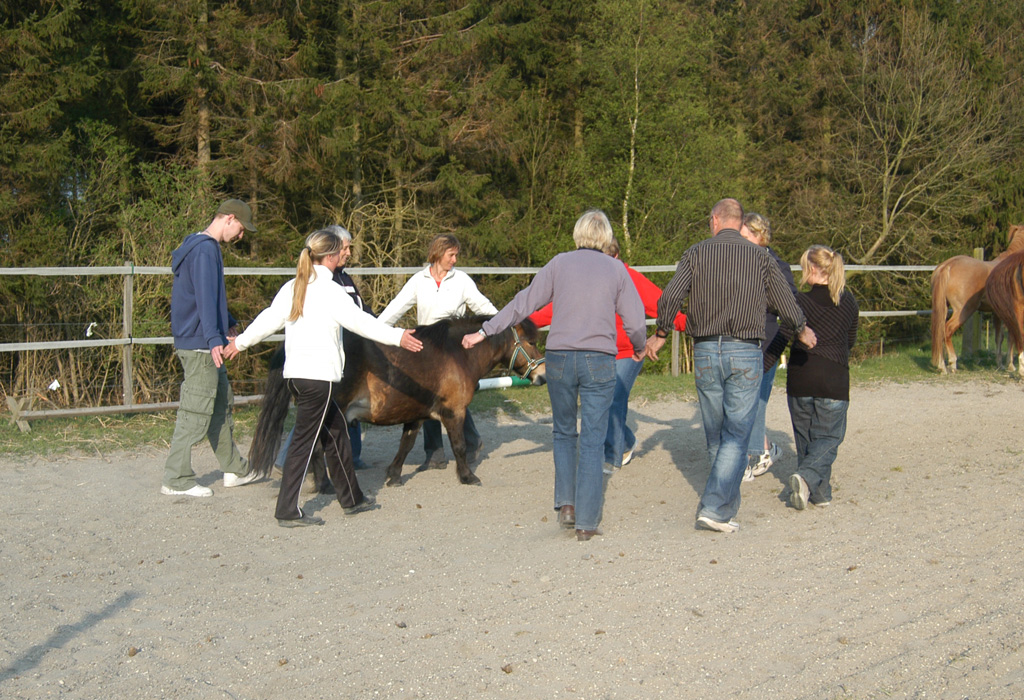 En større gruppe er i gang med coaching med heste