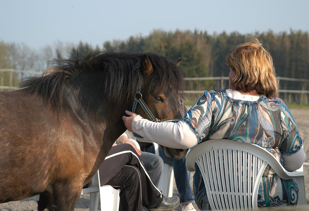 Hest og gruppe deltager close op billede