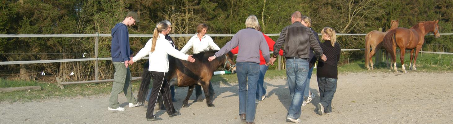 Slider til Coaching med heste