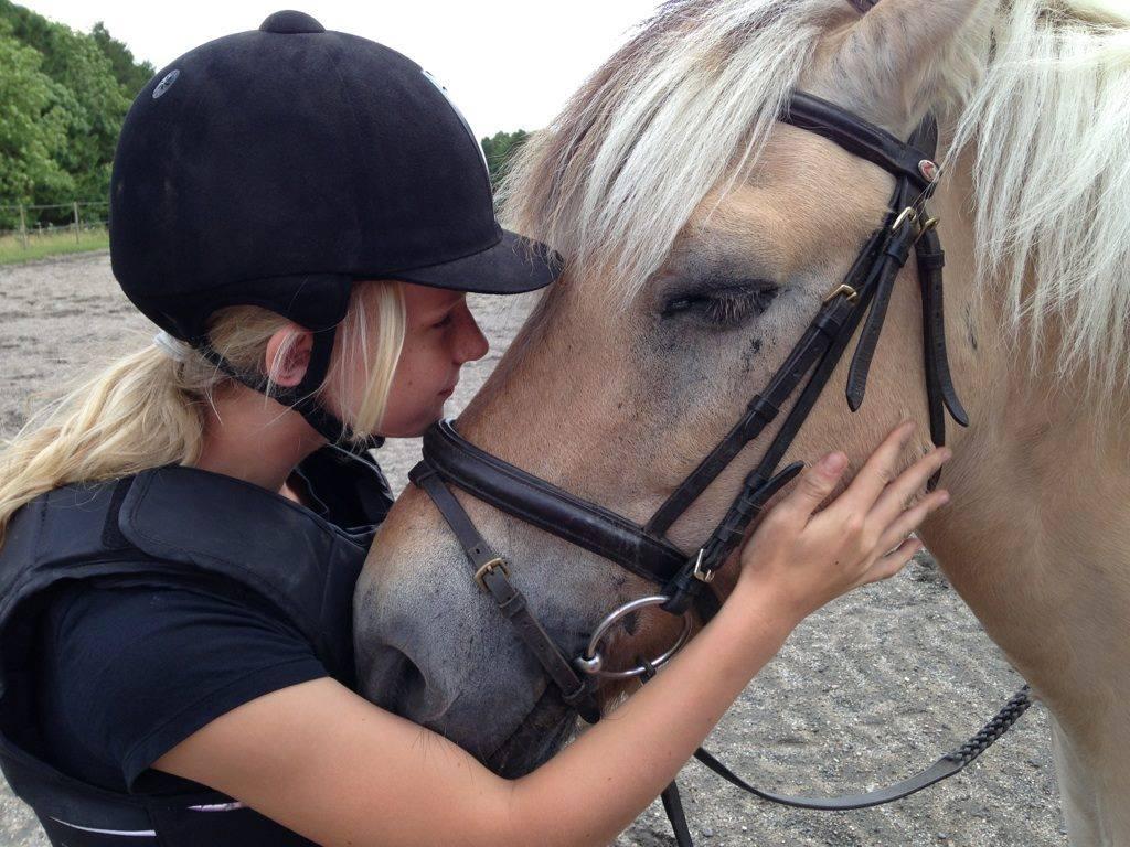 Billede af en hesterace